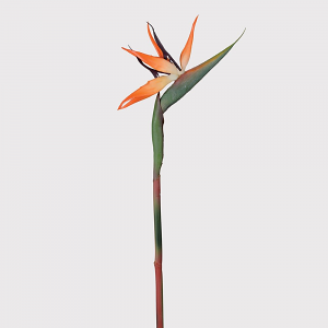 Bird of Paradise Stem