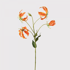 Orange Gloriosa Spray