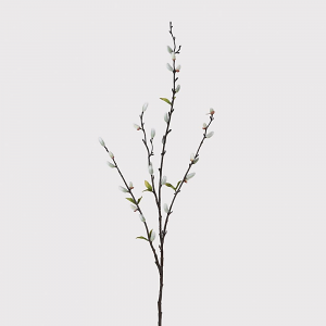 Willow Stem with Leaves