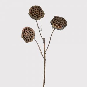 Natural Lotus Stem