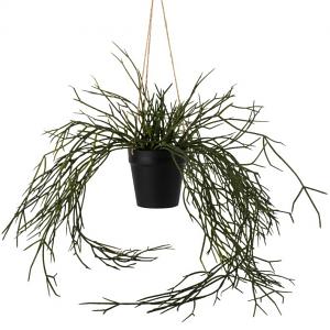 Hanging Grass