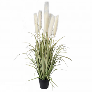Onion Grass with Wheat Plant