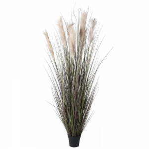 Onion Grass with Wheat Plant - Tall