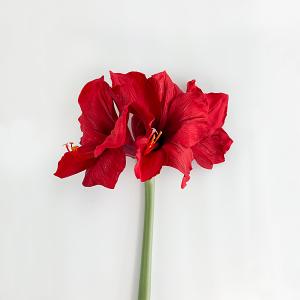 Red Amaryllis - Giant
