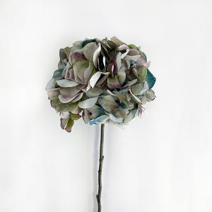 Pale Lavender Hydrangea