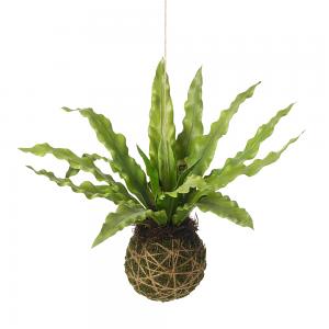Hanging Fern Ball
