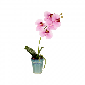 Pretty in Pink Potted Orchid