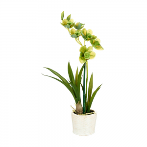 Charming Green Potted Orchid