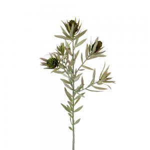 Protea Stem