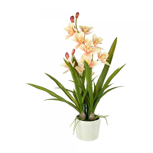 Cymbidium Potted Orchid
