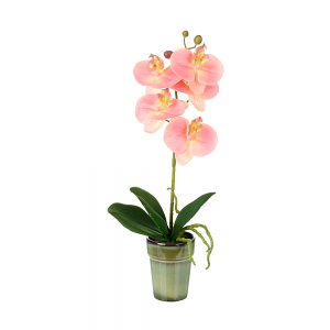 Ethereal Pink Potted Orchid - Small