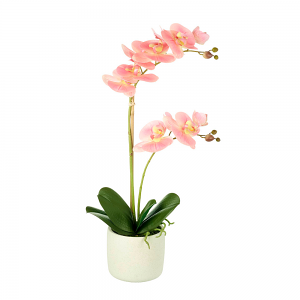 Ethereal Pink Potted Orchid - Large