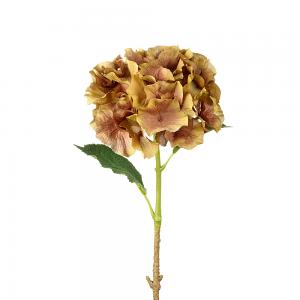 Golden Brown Hydrangea Stem