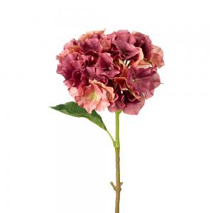 Blush Damson Hydrangea Stem