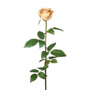 Peach Rose Stem