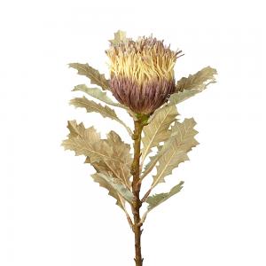 Light Green Brown Protea Stem