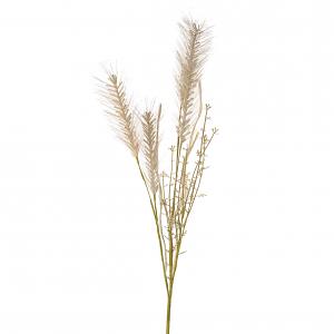 Wheat Grass Spray - Cream