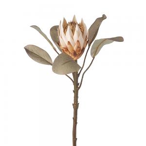 Protea Stem - Cream and Green